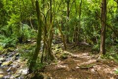 Hawaii oahu tropisk djungel Arkivfoto