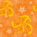 hawaii orangemodell Royaltyfri Fotografi