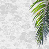 Hawaii with palm background Royalty Free Stock Image