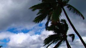 Hawaii Palm Tree Blue Sky Clouds 3.  stock footage