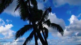 Hawaii Palm Tree Blue Sky Clouds.  stock video