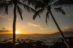 Free Hawaii Palm Tree Sunset Sunstar Royalty Free Stock Image - 66040516