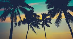 Hawaii palm trees. At sunset stock footage