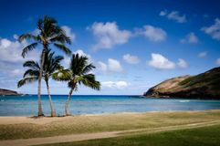 Hawaii palms. Beach with palm trees Stock Image