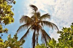 Hawaii palmträd under den blåa himlen arkivfoto