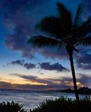 hawaii palmträdskymning royaltyfri fotografi