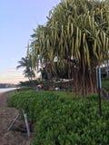 hawaii plażowy wektor ilustracyjny tropikalny Obraz Royalty Free