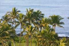 Hawaii shore- beautiful palms with Pacific ocean Stock Photography