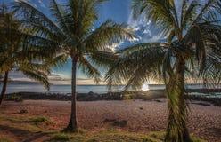 Hawaii solnedgångpalmträd Oahu Royaltyfria Bilder