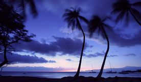 Hawaii at sunset. (palm trees swaying in the wind Royalty Free Stock Images