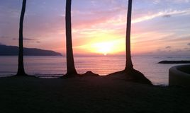 Ocean Sunset Through the Trees. Sunset over the beach and through the palm trees Stock Images
