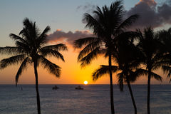 Hawaii Sunset with palm tree silhouette Stock Images