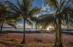 Hawaii Sunset Palm Trees Oahu Royalty Free Stock Images