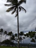 Hawaii träd på den stora ön Hawaii royaltyfri foto