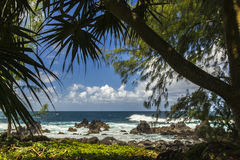 Hawaii tropisk strand Arkivfoto