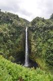 Hawaii vattenfall; Akaka nedgångar arkivfoton