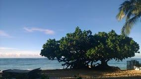 hawaii waikiki Arkivfoto