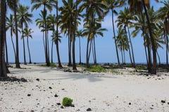 Hawaii White Sand Beach. White sand and coconut palm trees at Pu'Uhonua O Honaunau on the big island of Hawaii stock photo