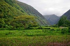 hawaii zielona dżungla Obrazy Stock