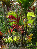 Hawaiiaans paradijs royalty-vrije stock foto's