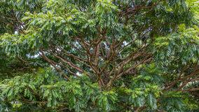 Hawaiiaans Regenwoud in Koolaus royalty-vrije stock foto's