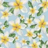 Hawaiiaanse bloemen Stock Fotografie