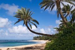Hawaiiaanse strand en palmen Stock Afbeeldingen