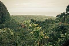Hawaiian обозревает Стоковые Фото