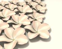hawaiian цветка Стоковые Изображения