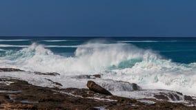 Hawaiian beach with blue waves. Hawaiian beach with blue ocean waves and rocky beach royalty free stock photos