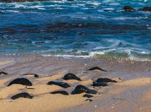Hawaiian beach with blue waves. Hawaiian beach with blue ocean waves with blue sky and rocky beach stock photos