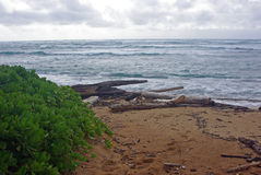 A Hawaiian Beach on Maui Royalty Free Stock Image