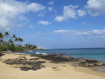 Hawaiian beach. Palm tree on a Hawaiian beach royalty free stock images