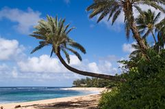 Hawaiian beach and palms Stock Images