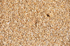 Hawaiian beach sand with small soft-shell crab. This is a standard picture of beach sand at first look. The reader / visitor will notice sand and some shadow in Stock Image