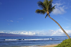 Hawaiian Beach Scenic. A lone palm tree stands stately over an island beach in hawaii Stock Photo