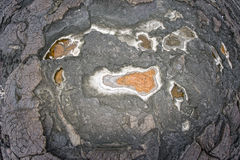 Hawaiian black lava shore Stock Images