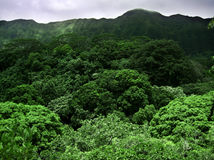 Hawaiian Canopy Royalty Free Stock Photo