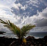 Hawaiian coast Royalty Free Stock Photo