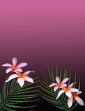 Hawaiian Dreams. Hawaiian plumeria flowers and wispy palm fronds Royalty Free Stock Image
