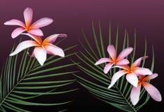 Hawaiian Dreams. Hawaiian plumeria flowers and wispy palm fronds Stock Images