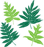 Hawaiian Ferns. Illustration of (4) different fronds of the Hawaiian Lauae fern Royalty Free Stock Images
