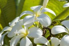 Hawaiian flowers. Tropical flowers of Oahu Island, Hawaii Stock Photography