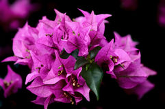 Hawaiian flowers. Bright close shot Royalty Free Stock Photography
