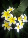 Hawaiian flowers. Green bueaty island royalty free stock image