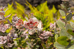 The hawaiian flowers. A view of the hawaiian flowers Stock Photo
