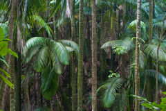Hawaiian forest Royalty Free Stock Photography