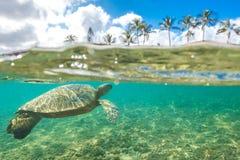 Hawaiian Green Sea Turtle cruising in the warm waters of the Pacific Ocean Stock Photo
