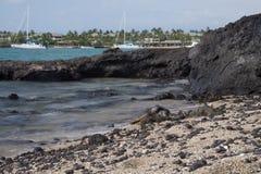 Hawaiian Green Sea Turtle - Hono Royalty Free Stock Photography