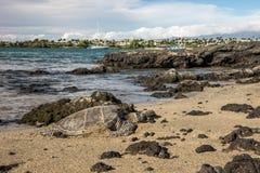 Hawaiian Green Sea Turtle - Hono Royalty Free Stock Photos
